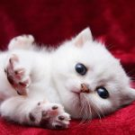 little_white_cat_1920x1080