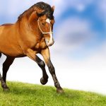 running-horse-wallpaper-hd-12850-hd-wallpapers